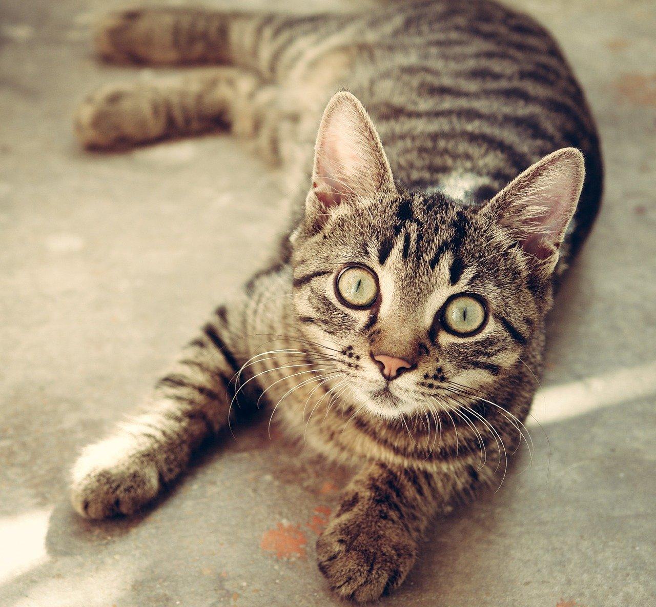 cat, animal, cute